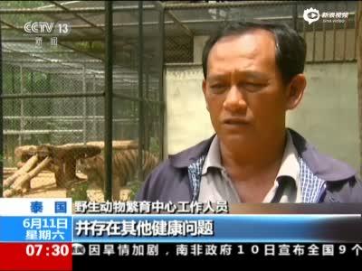 泰国虎庙丑闻持续发酵:警方发现疑似屠宰场