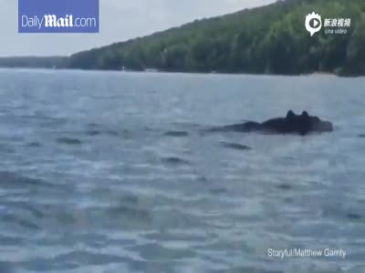 美国大叔在湖上划艇 身边现游泳大黑熊