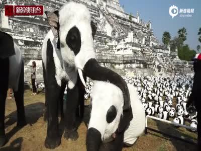 实拍泰国象园把大象涂成熊猫 称为配合熊猫展
