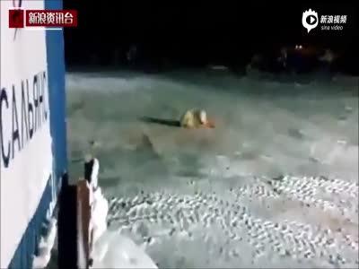 俄军厨师被曝虐杀北极熊 在其食物中混入爆炸物