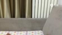 哈哈 牛牛喜欢放屁的声音[哈哈][哈哈](来自拍客手机客户端 下载地址:http://video.sina.com.cn/app/sinapaike.html)