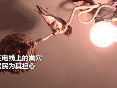 """小燕子""""极限筑巢"""" 郑州市民看到后心情不淡定了!"""