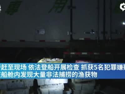 上海查获非法捕捞梭子蟹17吨,5人被刑拘_围观_澎湃新闻-The Paper
