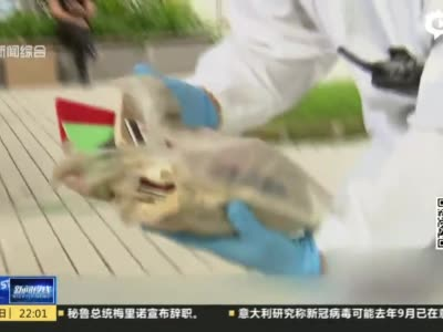视频|垃圾堆满楼邻居忍无可忍 执行法官清出9卡车杂物_上海图文_看看新闻