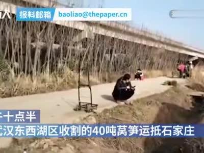 武汉司机捐赠的50吨蔬菜已发放到石家庄市民手中