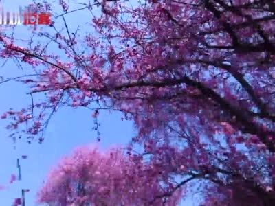 拍客丨崇州的春天最成都