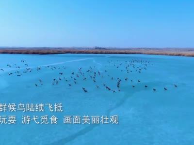 【视频】甘肃肃南:冰化候鸟嬉