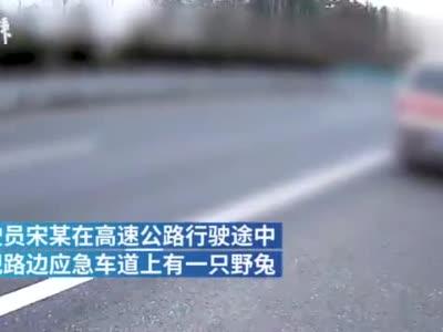 男子高速公路停车只为抓野兔,被交警逮个正着