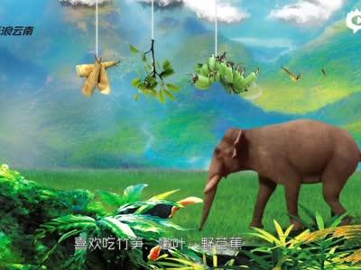 奇妙動物在哪里,當然是云南嘍!