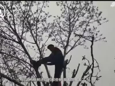 """73岁老者带刀上树采摘""""美食""""被好心市民婉转劝下"""