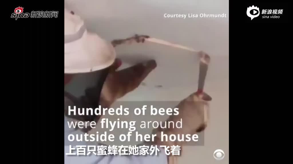 12万只蜜蜂藏天花板 蜂窝重50多公斤