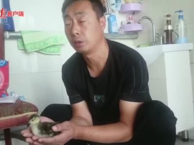 视频 精心照顾一个月 网购孔雀蛋孵出鸭子