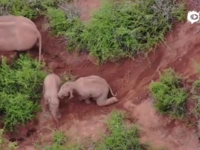 无人机拍下小象打闹超萌画面