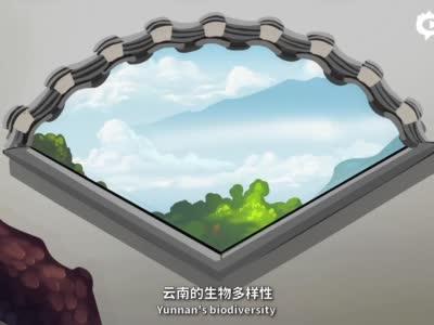 """【视频】【""""象""""往春城 相约COP15】云南生物多样性很丰富吗?超乎你想象"""