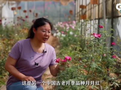 """科学家的Vlog-寻找玫瑰花的""""祖先"""""""