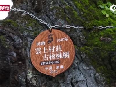 """光明村""""铁核桃""""步道"""